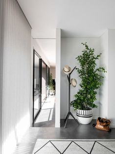 V Residence, modern entry way, weeping fig, ficus benjamina, hat stand Tropical House Plants, House Plants Decor, Plant Decor, Common House Plants, 1960s House, Modern Entry, Low Light Plants, Hat Stands, Old Farm Houses