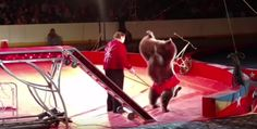 TAKE ACTION! Please join us in letting the Mid-America Center know that an arena filled with noisy crowds is no place for wild animals.