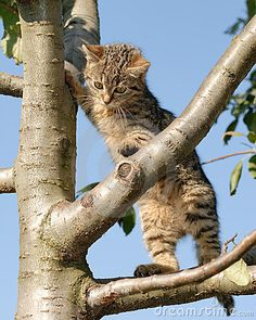 Curious kitty on a tree