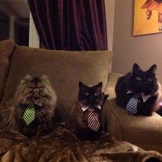 Loosen your tie and get cozy! #thenightnightclub #powercat