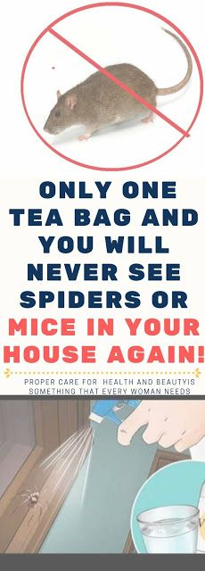 Only One Tea Bag and You Will Never See Spiders or Mice In Your House Again!