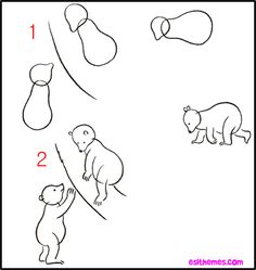 Learn How To Draw A Bear 2