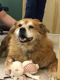 Things are looking better for Che, the Chow and Labrador mix who is credited with saving his owner from a fire that consumed the first floor of their Philadelphia home.
