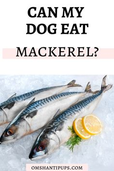 Can dogs eat mackerel? Here are the commonly asked questions about feeding dogs Mackerel! Dog Lover Quotes, Dog Quotes, Animal Nutrition, Pet Nutrition, Tattoos For Dog Lovers, Dog Training Books, Cute Dog Photos, Can Dogs Eat, Homemade Dog Treats