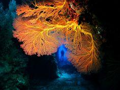 Tranquillity Island Resort in Port Villa - best diving in Vanuatu!
