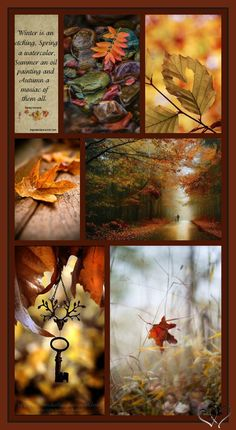 Moodboard Inspiration, Photo Collages, Autumn Scenery, Fall Pictures, Wall Papers, Color Box, Beautiful Patterns, Picture Quotes, Wonders Of The World