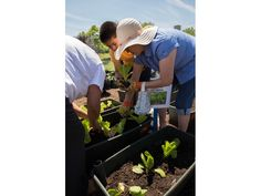 Highland Park Patch: Community Garden Launched in June at North Chicago Health Clinic http://patch.com/illinois/highlandpark/community-garden-launched-june-north-chicago-health-clinic Community Garden Launched in June at North Chicago Health Clinic | Highland Park, IL Patch