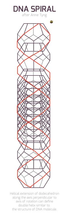 """""""rotating dodecahedron forms decagon with 10 turns/circumference - in each turn a Divine Proportion progression"""" Anne Tyng, Geometric Extensions of Consciousness"""