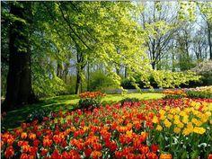 The Netherlands tulip flields in May