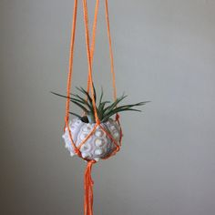 Air Plant Pod. Neon Macrame Hanger With Tillandsia Air Plant In Sea Urchin  Shell Planter
