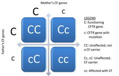 Cystic Fibrosis Punnett Square: Parents that are heterozygous for the gene, or are  both carriers but do not express the disease, have a 25% that their child will be a genotype for CF & express the disease, 50% that the child will be a carrier (genotype but will not express CF), and a 25% chance that the child will not have the disease, nor be a carrier