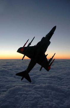 One of the best Harrier photos by Luigino Caliaro.
