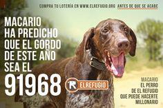 """Macario, el perro de """"El Refugio"""" que puede hacerte millonario"""