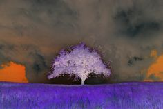 Dandelion, Flowers, Plants, Painting, Painting Art, Kunst, Dandelions, Paintings, Plant