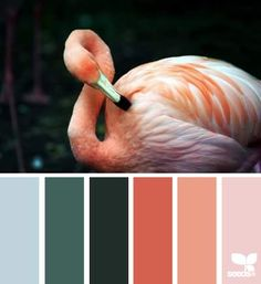 DesignSeeds® FB  { flamingo tones }  February 11 2013