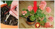 Nemusíte do črepníkov pichať zápalkové hlavičky, toto je lepšie riešenie. Flowers, Anna, Gardening, Decor, Decoration, Decorating, Garten, Dekorasyon, Dekoration