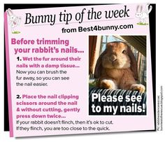 Bunny tip of the week - To help with trimming their nails