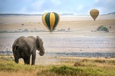 Elephants and Hot Air Balloons in the Kruger National Park. South Africa   Слони і повітряні кулі в Національному парку Крюгера, Південна Африка