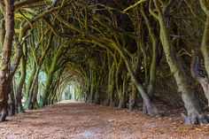 """Forest bathing: Gormanston, Ireland  It's no secret that spending time in nature offers immense health benefits. Even something as simple as taking a leisurely hike through the woods can turn around a bad mood.  If you know what I'm talking about, then you'll be interested to know there's a name for this phenomenon: Shinrin-yoku, which means """"forest bathing"""" in Japanese."""