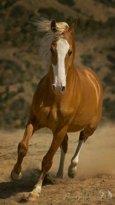 Horse photography - Palomino in motion.