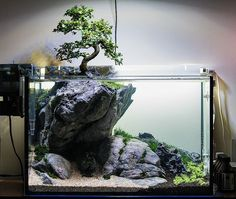 Bonsai Tree in nature style aquarium - just beautiful!