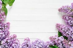 Lilac flowers frame on white wood - Arts & Entertainment - 1