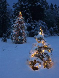 lights in snow | Christmas Tree lights in the Snow by Anthony Dunn Photography | Winter