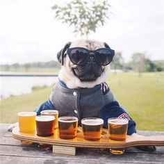 Venga, beber juntos