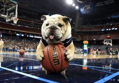 Get your own ball! SO ADORABLE
