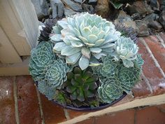 My California Garden in Zone 23: Succulents at Sherman Garden and Library