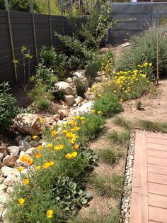 The rain garden and swale is planted with California natives, which are drought-tolerant and provide habitat for butterflies and other wildlife. The garden is divided into different areas, including chaparral, fruit trees, cut flowers, berry patch, banana bed and vegetable garden.