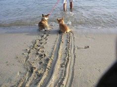 Funny Dogs Without Words 1000+ images about Fun...
