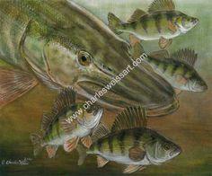 Image from http://www.charlesweissart.com/galleries/fish_paintings/perchmayhem.jpg.