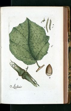 La Flore Des Environs De Paris   botanical illustration