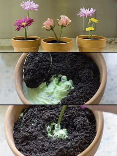 Dirt cake - great for a garden party or cookout.