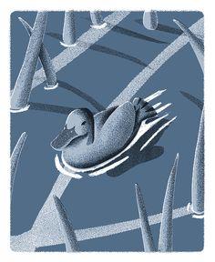 John William Walters - duck