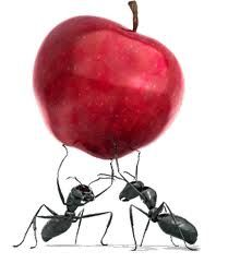 15 Best Have You Ever Watched Ants At Work Images Ants Ant Ant