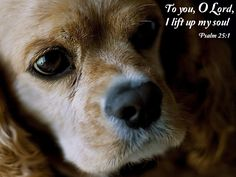 how to help surviving dog cope wth other dogs death