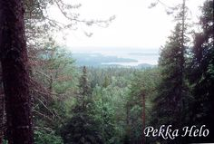 #Vuokatti #forest #hill