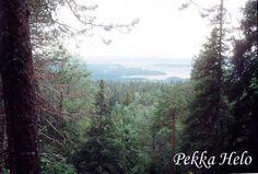 #Vuokatti #forest #hill