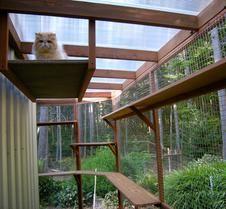 """Cat Enclosure Testimonials - Client Profile """"Catimonials"""""""