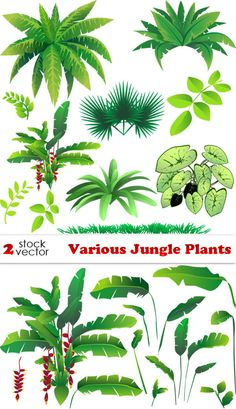 Vectors - Various Jungle Plants 2 AI |  TIFF Preview | 13 MB