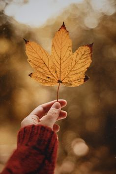 Classy Photography, Leaf Photography, Beautiful Landscape Photography, Autumn Photography, Creative Photography, Fall Images, Fall Pictures, Fall Photos, Nature Pictures