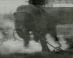 The Current Wars, Thomas Edison, and the Electrocution of Topsy the Elephant (1903).