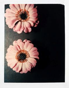 Andy Warhol Flowers, 1982 polaroid photograph 4 x 3 inches; x cm PK 12403