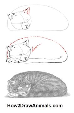 Pencil Drawing Techniques Learn how to draw a sleeping cat in graphite pencil Sleeping Drawing, Cat Sleeping, Sleeping Animals, Pencil Art Drawings, Drawing Sketches, Graphite Drawings, Animal Sketches, Animal Drawings, Cat Drawing Tutorial