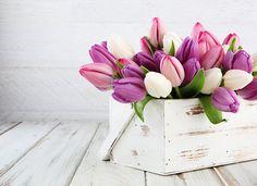 simple guide to arranging flowers - purple tulips Vintage Flower Arrangements, Beautiful Flower Arrangements, Beautiful Flowers, Flower Vases, Flower Pots, Orquideas Cymbidium, Baby Shower Flowers, Purple Tulips, Flower Farm
