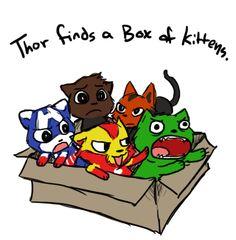 Avengers Kittens
