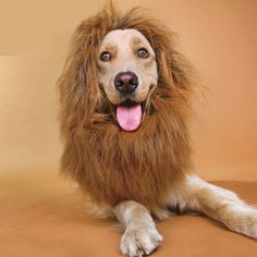 New Pet Costume Lion Mane Wig for Dog Cat Clothes Party Fancy GFY