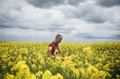 Arnaud Rousseau walks among his rapeseed fields in Trocy-en-Multien, France. Rapeseed yields in Europe, where genetically modified crops are banned, remain higher than in Canada, where GMOs have long been in use. (ED ALCOCK/NYT)